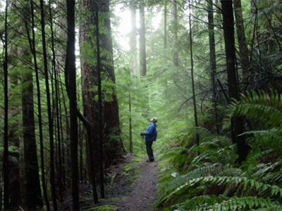 The big trees and rainforest of the Colonel Bob trail.