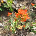 Colorful Paintbrush