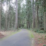 Sequim Bay State Park big trees
