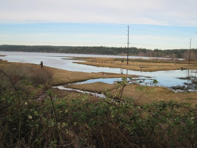 Discovery Bay Estuary