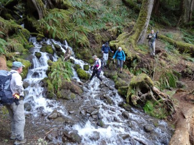 Hiking the South Fork of the Skokomish River