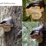 Trail Troll in a tree