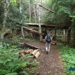 The wide Skokomish Trail