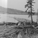 Logs in Sequim Bay Courtesy of Port Angeles Public Library