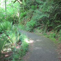 Paved Path to Madison Falls - Olympic National Park