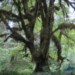 Rain forest lowlands