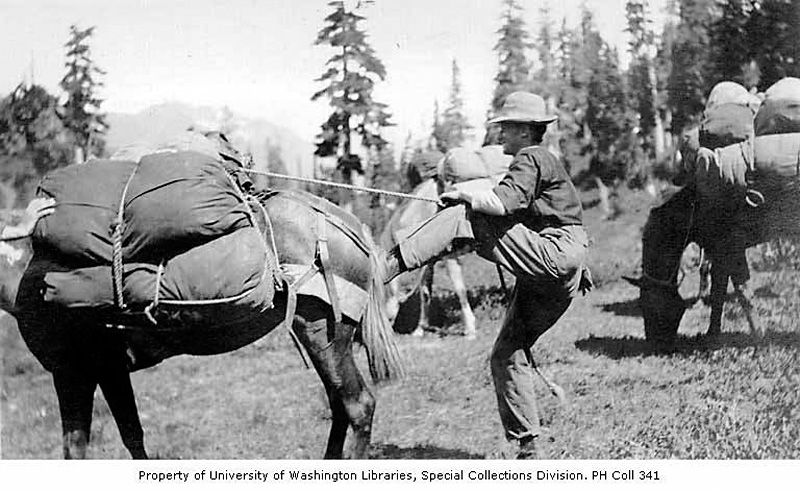 Man packing a horse, UW Digital Collection Album 27085a Seattle Mountaineers 2nd Olympic Outing, August 1913