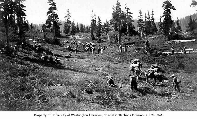 UW Digital Collection Album 27103a Mountaineers and horses in meadow August 1913