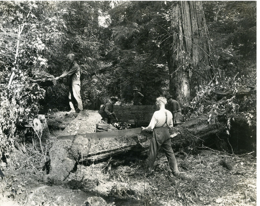 Forest Service building Quinault Trail circa 1920's Courtesy Washington State Historical Society