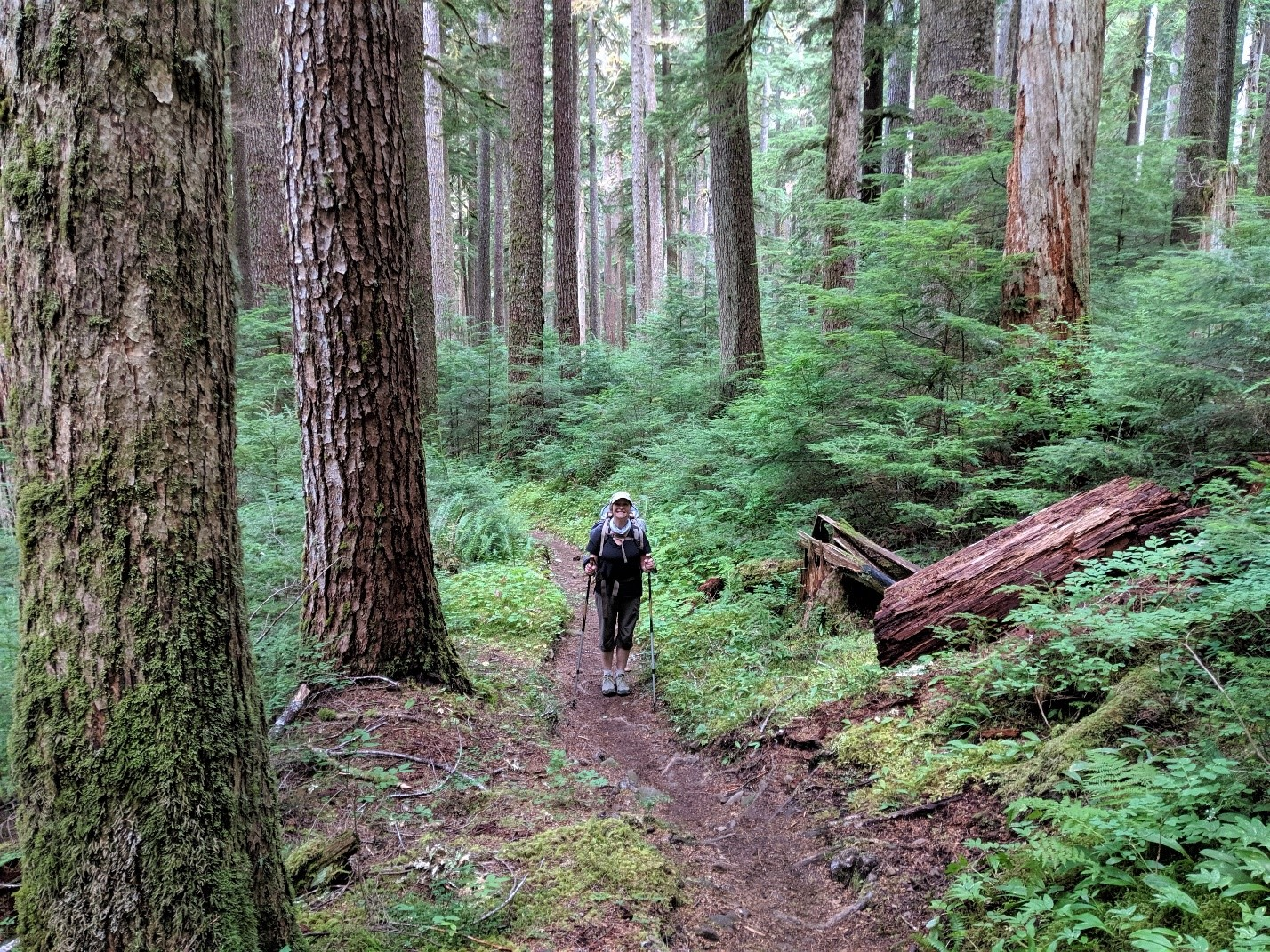 Trisha Wirta in her hiking gear walking up a trail in the National Forest
