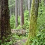The footbridge at 2 miles.