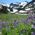 Wildflowers below Grand Pass