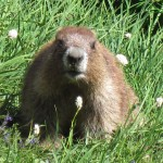 The Olympic Marmot asks what's what