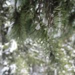 Frozen jewlery