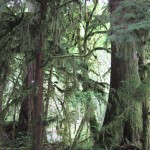 Thick verdure of the forest