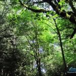 Hardwood canopy