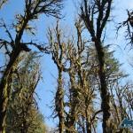 Hardwoods waiting for spring