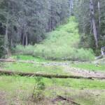 Diamond Meadow