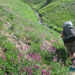 Pretty Lupines ease the pain of the slog