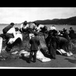 Makah skinning a whale on the beach - ONP Archives